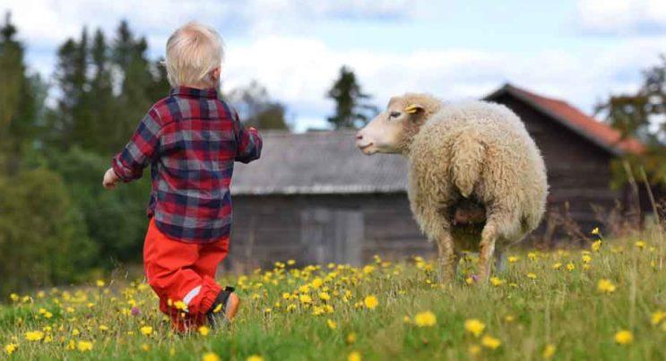 Barn som matar ett får på en äng.